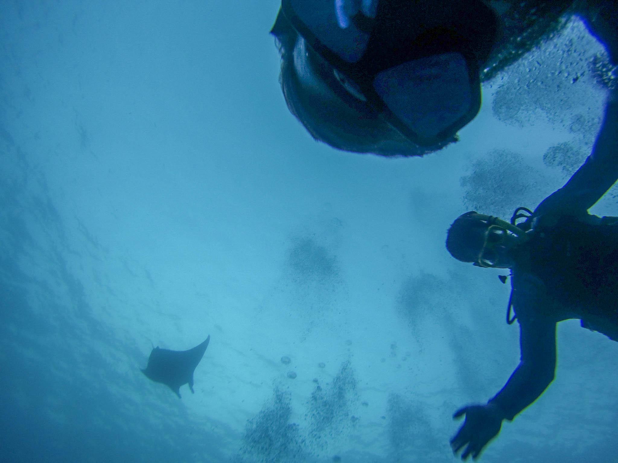 Manta Ray Dive Best Big Island Hawaii Things To Do