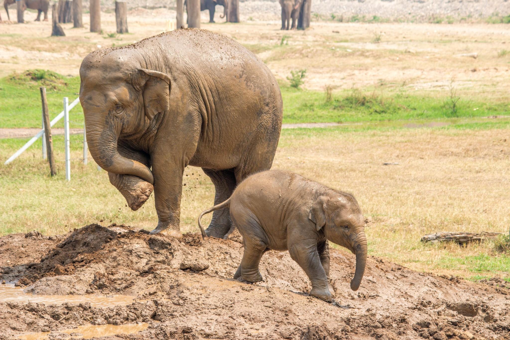 Thailand Print by Tabitha Mary Chiang Mai Elephant Nature Park