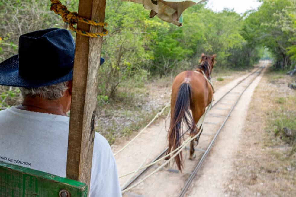 Three Cenotes of Cuzuma Horse Drawn Cart
